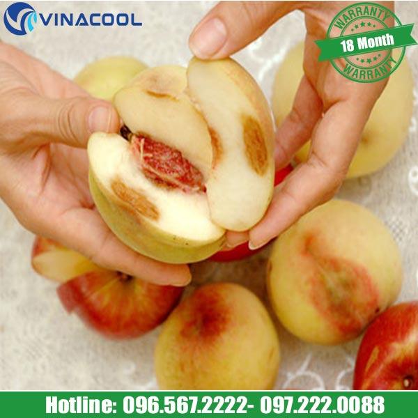 hoa quả bị hỏng khi không đáp ứng được nhiệt độ